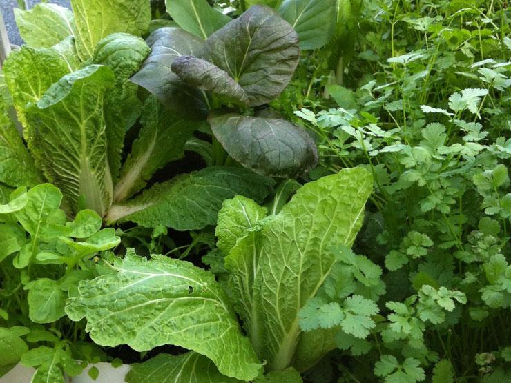NutriSoil garden