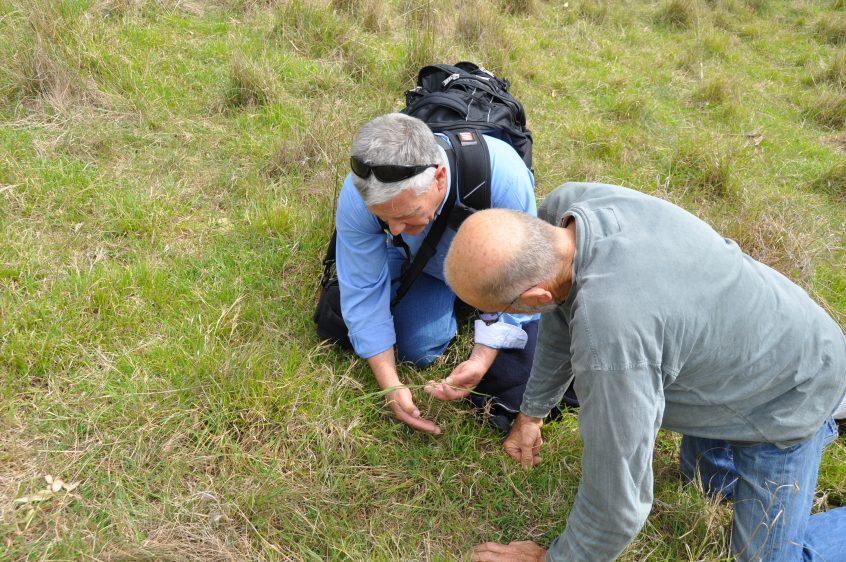 Inspecting grasses